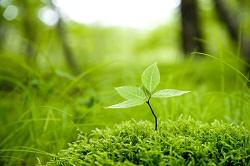 豊かな自然に触れながら生活すること